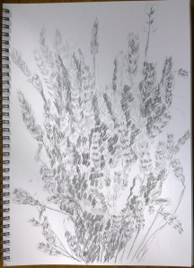 Drawing_24.09.15_(29.7x42cm)