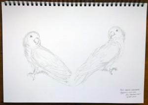 sketch_9.11.15_(42x29.7cm)