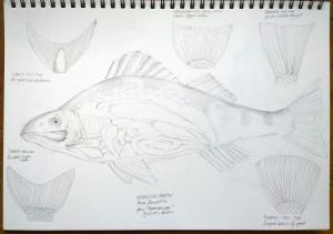sketch_7.11.15_(42x29.7cm)
