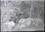 sketch..._16.08.16_(42x29.4cm)