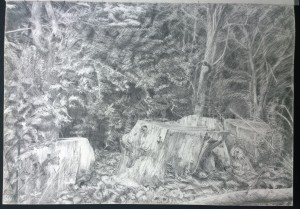 sketch_29.08.16_(42x29.4cm) Logs at Kenwood