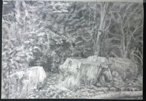 sketch_29.08.16_(42x29.4cm) Logs at Kenwood