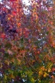 Symphony of Autumn Colour