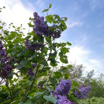 20210509_20_16_4_05MB Lilac