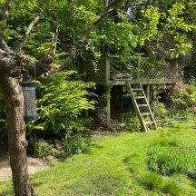 20210518_Honeysuckle on tree house